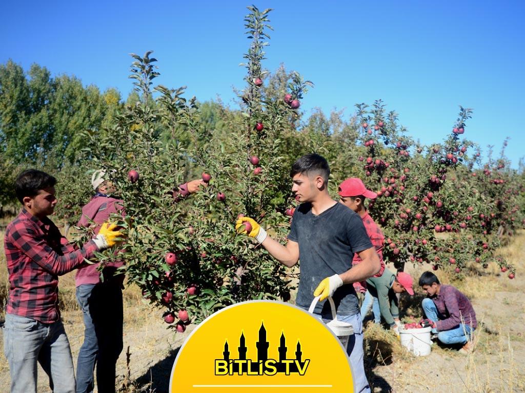 Bitlis'te Elma Bahçelerinden 20 Milyon Lira Gelir